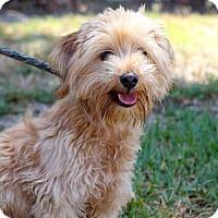 Adopt A Pet :: Lourdes - San Diego, CA
