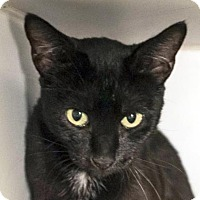 Adopt A Pet :: Lila - Austin, TX