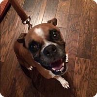 Adopt A Pet :: G'ma Jo - Austin, TX