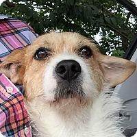 Adopt A Pet :: Sadie - Mooresville, NC