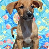 Adopt A Pet :: Tacoma (6 lb) Video! - West Sand Lake, NY