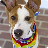 Terrier (Unknown Type, Medium) Mix Dog for adoption in Baton Rouge, Louisiana - Kenneth