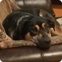 Adopt A Pet :: Kaarlee - Silverdale, WA