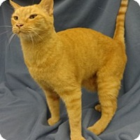 Adopt A Pet :: Frazier - Olive Branch, MS