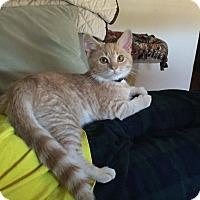 Adopt A Pet :: Jimmy - Monroe, NC