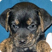 Adopt A Pet :: Kimora - Wildomar, CA