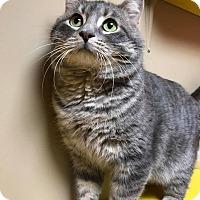 Adopt A Pet :: Turkey - Maryville, MO