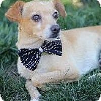 Adopt A Pet :: Belvedere - Atascadero, CA