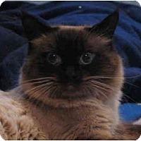 Adopt A Pet :: Gizmo Kittey - Cincinnati, OH