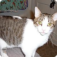 Adopt A Pet :: Harry - Springfield, PA