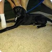 Adopt A Pet :: Wilbur - Plainfield, IL