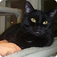 Adopt A Pet :: Jo Jo - Hamburg, NY