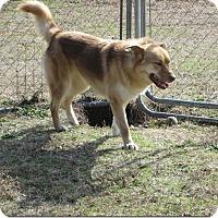 Adopt A Pet :: Ella - Manning, SC