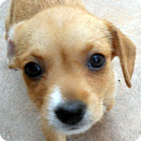 Adopt A Pet :: Selby - Adoption Pending - Oakley, CA