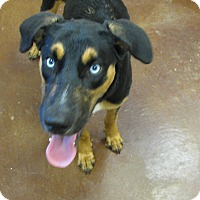 Adopt A Pet :: Dolly - Charlemont, MA