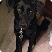 Adopt A Pet :: Sashay - Evergreen, CO