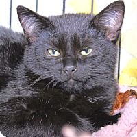 Adopt A Pet :: Blake - Middletown, CT