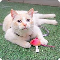 Adopt A Pet :: Sammy - North Ogden, UT
