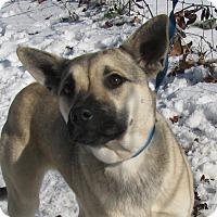Adopt A Pet :: Roxy - Bedminster, NJ