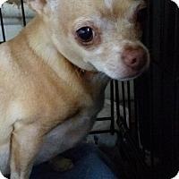 Adopt A Pet :: HOUDINI - TAHOKA, TX