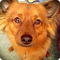Adopt A Pet :: Marco - Adoption Pending - West Allis, WI