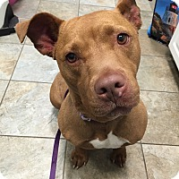Adopt A Pet :: Jada - Park Ridge, NJ