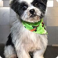 Adopt A Pet :: Missouri - McKinney, TX