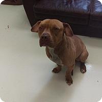 Adopt A Pet :: Mr. Big - Mt. Gilead, OH