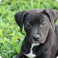 Adopt A Pet :: Jenelle - Glastonbury, CT