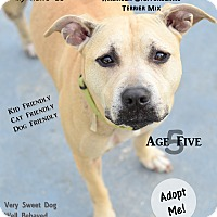 Adopt A Pet :: Bella - Port Charlotte, FL