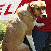 Labrador Retriever Mix Dog for adoption in Grayson, Louisiana - Peanut