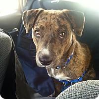 Adopt A Pet :: Thumper - East Randolph, VT