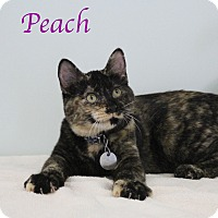 Adopt A Pet :: Peach - Bradenton, FL