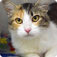 Adopt A Pet :: Louise - Dublin, CA
