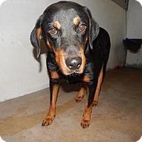 Adopt A Pet :: ON EUTHANASIA LIST - Only $25 - Litchfield Park, AZ