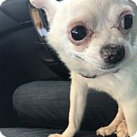 Adopt A Pet :: ELMER - Los Angeles, CA