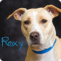Adopt A Pet :: Roxy - Somerset, PA