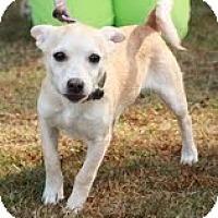 Adopt A Pet :: Mario - Brattleboro, VT