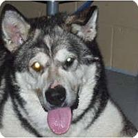 Adopt A Pet :: BG - Huntington Station, NY