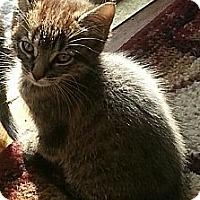 Adopt A Pet :: Tatianna - Whitestone, NY