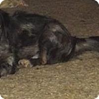 Adopt A Pet :: Callie - Allentown, PA