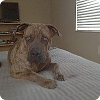 Adopt A Pet :: Russell - Miami, FL