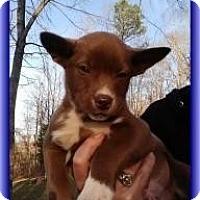 Adopt A Pet :: Brutus - Brattleboro, VT