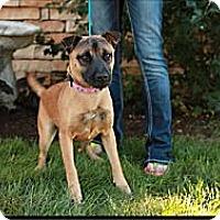 Adopt A Pet :: Yuna - Lancaster, OH