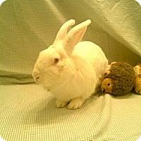 Adopt A Pet :: Alfie - Paramount, CA