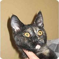 Adopt A Pet :: Daisy - Jenkintown, PA