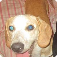 Adopt A Pet :: Axel - York, SC