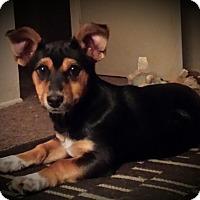 Adopt A Pet :: Candy - San Dimas, CA