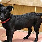 Adopt A Pet :: DUTCH