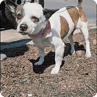 Adopt A Pet :: Patches - Cincinnati, OH